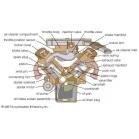 Tiếng Anh chuyên ngành ô tô (phần 44) - ĐC xăng và ĐC diesel